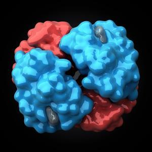 Haemoglobin Molecule, Artwork by Visual Science