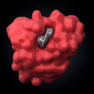Myoglobin Molecule by Visual Science