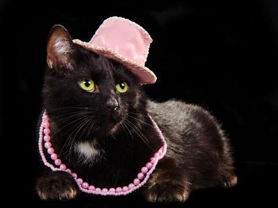 Glamorous Black Cat Wearing Pink Hat And Beads Against Black Background