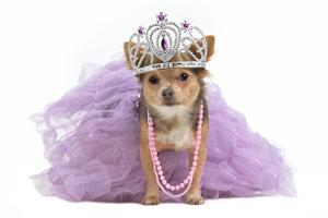 Royal Dog With Crown Isolated by vitalytitov
