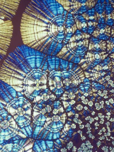 Vitamin C (Ascorbic Acid) Crystals, Polarized LM-George Musil-Photographic Print