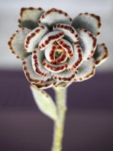 Succulent Plants Flower Cactus with Stem close Up by viteethumb studio