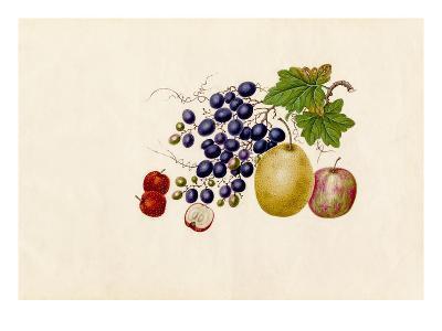 Vitis vinifera, Malus prunifolia, Pyrus communis, Sorbus megalocarpa-Wang Lui Chi-Giclee Print