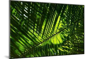 Beautiful Palm Tree Leaves Texture near the Iguazu Falls, Paran¡, Brazil by Vitor Marigo