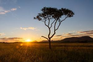 Sunset on a Beautiful Cerrado Vegetation Landscape with One Single Lonely Tree Silhouette, Chapada by Vitor Marigo