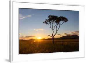 Sunset on a Beautiful Cerrado Vegetation Landscape with One Single Lonely Tree Silhouette, Chapada by Vitor Marigo