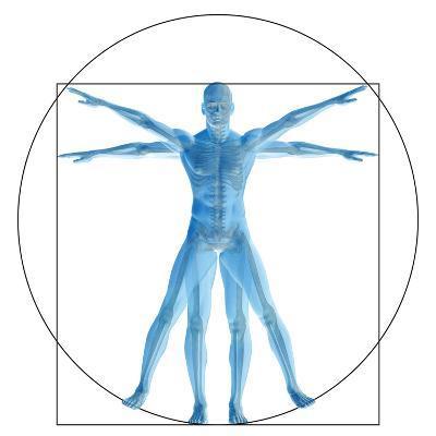 Vitruvian Human or Man, Anatomy Body for Biology-bestdesign36-Art Print