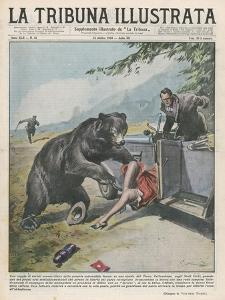 In Yellowstone a Bear Pats a Woman in a Car by Vittorio Pisani