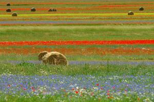 Flowering and Hayballs by Vittorio Ricci - Italy