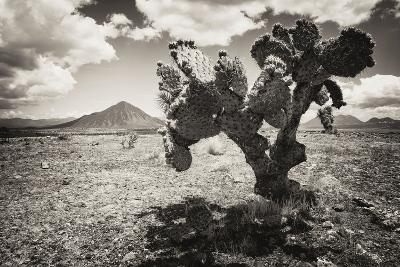 ?Viva Mexico! B&W Collection - Cactus in the Mexican Desert II-Philippe Hugonnard-Photographic Print