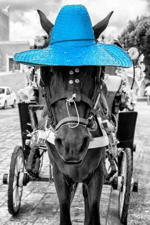 https://imgc.artprintimages.com/img/print/viva-mexico-b-w-collection-horse-with-blue-straw-hat_u-l-q13974w0.jpg?p=0