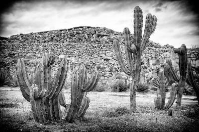 ?Viva Mexico! B&W Collection - Mexican Cactus-Philippe Hugonnard-Photographic Print