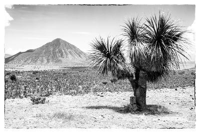 ¡Viva Mexico! B&W Collection - Mexican Desert-Philippe Hugonnard-Photographic Print