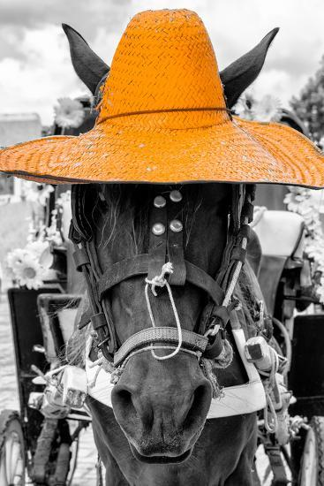 ?Viva Mexico! B&W Collection - Portrait of Horse with Light Orange Hat-Philippe Hugonnard-Photographic Print