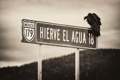 ?Viva Mexico! B&W Collection - Vulture-Philippe Hugonnard-Photographic Print