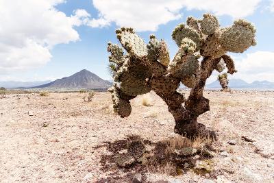 ?Viva Mexico! Collection - Desert Landscape - Puebla II-Philippe Hugonnard-Photographic Print