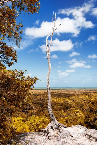 ¡Viva Mexico! Collection - Tree in the Mexican Jungle with Fall Colors - Calakmul-Philippe Hugonnard-Photographic Print
