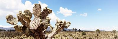 ¡Viva Mexico! Panoramic Collection - Desert Cactus VIII-Philippe Hugonnard-Photographic Print