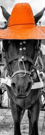 https://imgc.artprintimages.com/img/print/viva-mexico-panoramic-collection-horse-with-a-orange-straw-hat_u-l-q138rv10.jpg?p=0
