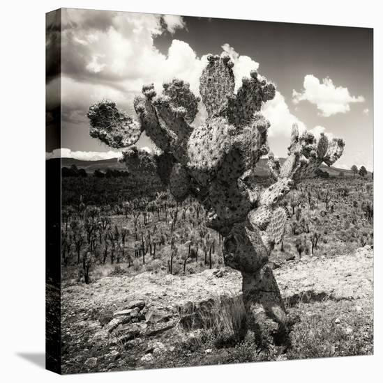 ¡Viva Mexico! Square Collection - Cactus Desert-Philippe Hugonnard-Stretched Canvas Print