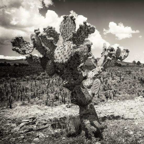 ¡Viva Mexico! Square Collection - Cactus Desert-Philippe Hugonnard-Photographic Print