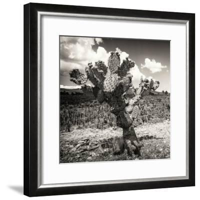 ¡Viva Mexico! Square Collection - Cactus Desert-Philippe Hugonnard-Framed Photographic Print