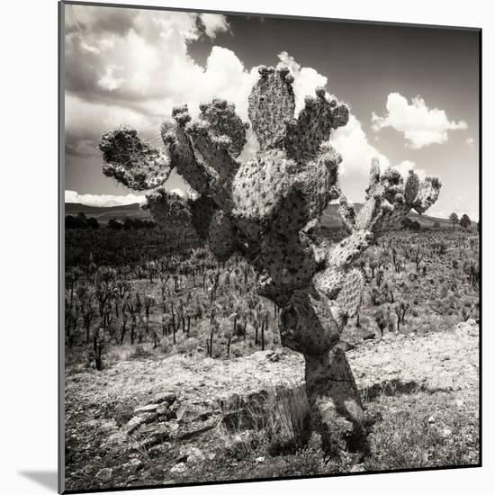¡Viva Mexico! Square Collection - Cactus Desert-Philippe Hugonnard-Mounted Photographic Print