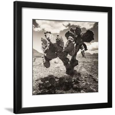 ¡Viva Mexico! Square Collection - Cactus I-Philippe Hugonnard-Framed Photographic Print
