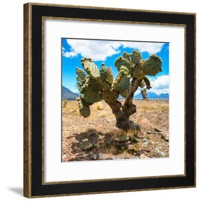 ¡Viva Mexico! Square Collection - Cactus II-Philippe Hugonnard-Framed Photographic Print