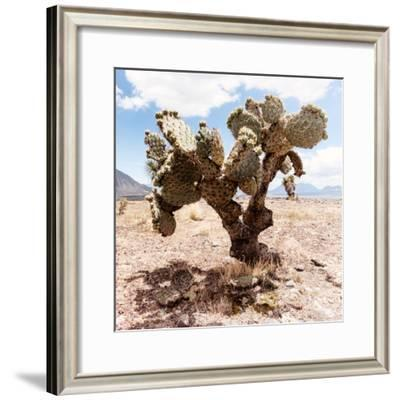 ?Viva Mexico! Square Collection - Cactus III-Philippe Hugonnard-Framed Photographic Print