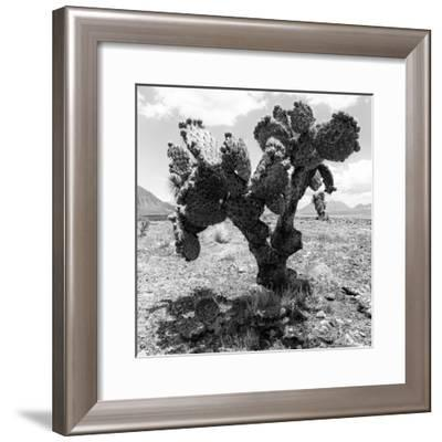 ¡Viva Mexico! Square Collection - Cactus-Philippe Hugonnard-Framed Photographic Print