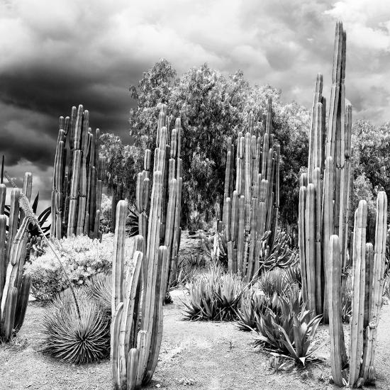¡Viva Mexico! Square Collection - Cardon Cactus B&W-Philippe Hugonnard-Photographic Print