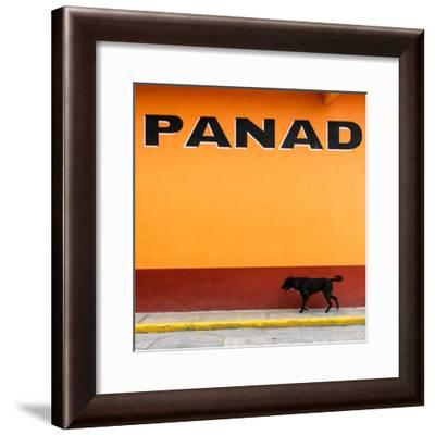 """¡Viva Mexico! Square Collection - """"PANAD"""" Orange Street Wall-Philippe Hugonnard-Framed Photographic Print"""