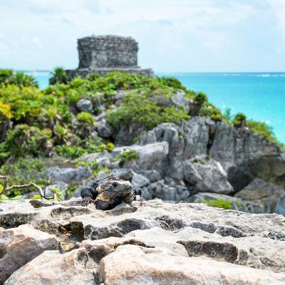 ¡Viva Mexico! Square Collection - Tulum Ruins along Caribbean Coastline with Iguana III-Philippe Hugonnard-Photographic Print