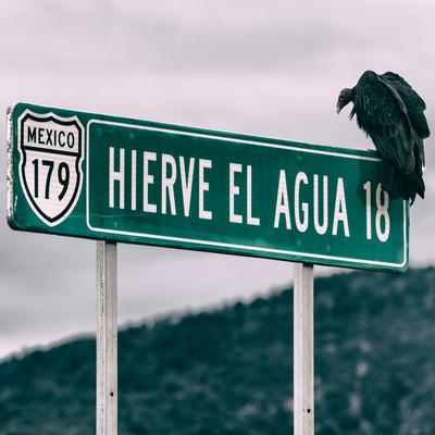 https://imgc.artprintimages.com/img/print/viva-mexico-square-collection-vulture_u-l-q139hf80.jpg?p=0