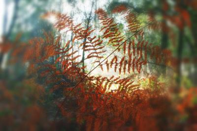 Autumn Light by Viviane Fedieu Daniel