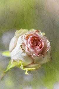 Exquisite Pink by Viviane Fedieu Daniel