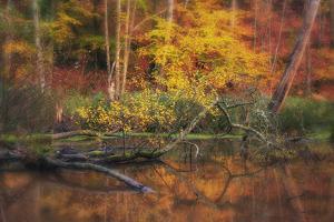 Fire Lake by Viviane Fedieu Daniel
