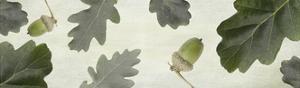 Oak by Viviane Fedieu-Daniel