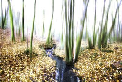 Spirit of Water by Viviane Fedieu Daniel