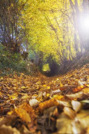 Sun Leaves by Viviane Fedieu Daniel