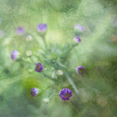 Tender Buds by Viviane Fedieu Daniel
