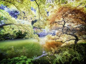 Zen Garden by Viviane Fedieu-Daniel