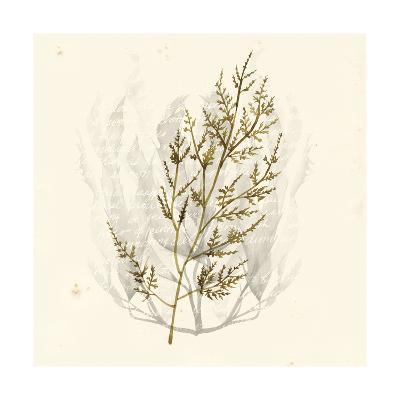 Vivid Algae I-Grace Popp-Art Print