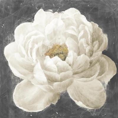 https://imgc.artprintimages.com/img/print/vivid-floral-i-white-flower_u-l-q1ayo7h0.jpg?p=0