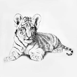 Tiger by Vivien Rhyan
