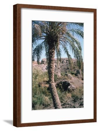 Palm Tree Below Lion of Babylon, Iraq, 1977