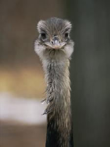 Emu at the National Zoo by Vlad Kharitonov