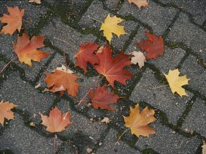 Red Maple Leaves Lie on a Brick Walkway by Vlad Kharitonov