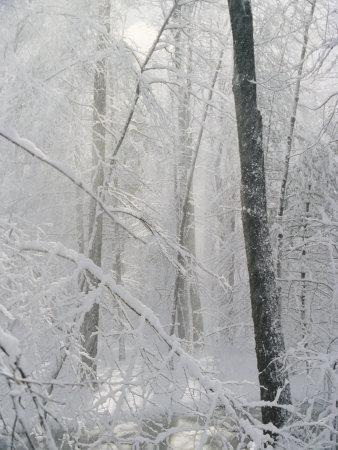 Snow Paints Trees White in the Woods of New York
